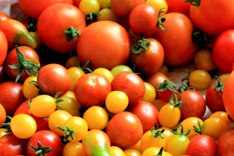 tomatoes-tomato-harvest-healthy-food-162830