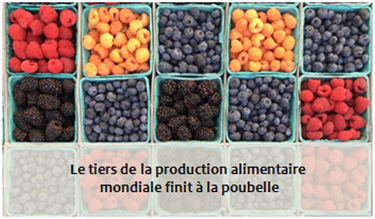 Le tiers de la production alimentaire mondiale finit à la poubelle